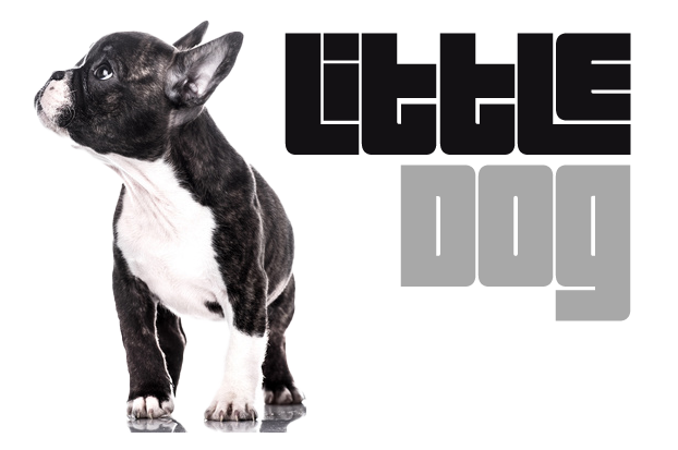 Little DOG, le site qui a du chien !